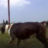 Vemicoアクションカメラを自撮り棒につけて犬目線のローアングルで撮る
