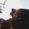 格安XDV360のWindows用アプリで動画の書き出しとYoutubeへのアップロード